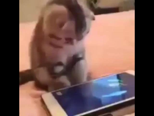 котёнок ловит виртуальных рыбок 😹😻