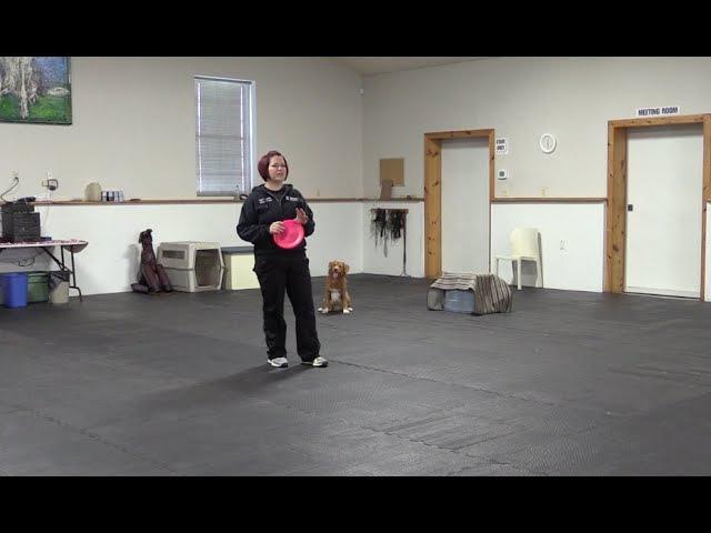 Disc Dog Tricks Teach Your Dog To Vault Off Your Back
