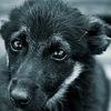 """""""Город""""-помощь бездомным собакам и котам"""