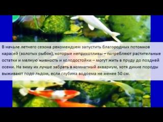 Разведение рыб в дачном пруду. Идеи для дачи