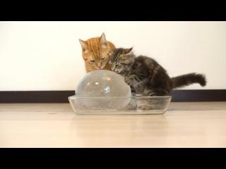 Милые котики - приколы с кошками - приколы с животными - котики 2015