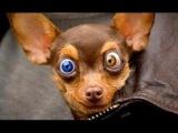 Смешные животные приколы с животными приколы с кошками смешные моменты про животных