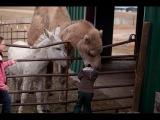 Приколы с детьми и животными. Смешное видео о детях и животных