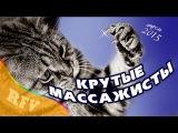 Самые смешные кошки #4 • Приколы с животными 2015 • Best Funny Cats Compilation · Part 4