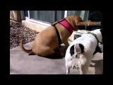 Смешные видео про животных собака кошка попугай