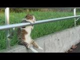 Короткие приколы про кошек. Приколы с животными