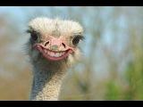 Смешные видео и приколы с животными, часть 5