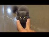 СМЕШНЫЕ ВИДЕО ПРИКОЛЫ ЮТУБА !!!#40 Подборка приколов с котами