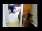 Самые Смешные Кошки 2014. Самое Смешное Видео Про Кошек. Funny Cats