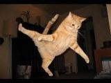Amazing funny video about cats // Самые смешные видео подборки про котов