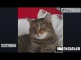 Приколы про животных 2016/Смешные животные/Приколы с животными 2016/приколы с котами 2016 ПОДБОРКА