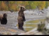 Приколы с животными 2014 года (Смешные животные 2014) Подборка Видео Приколов
