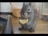 Мега приколы с животными лучшее видео приколов о животных