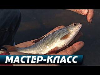 Водохранилищная Плотва и Весенний Фидер. Мастер-Класс