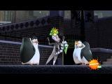 Пингвины Мадагаскара 1 Сезон 7 Серия