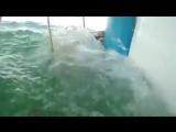 экстремальные животные нападает на человека: вода издание