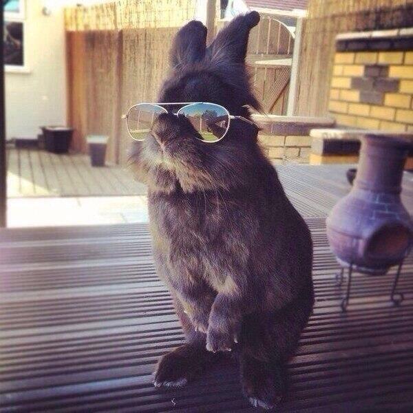 Как бы ты ни старался, ты никогда не будешь выглядеть так же круто, как этот кролик