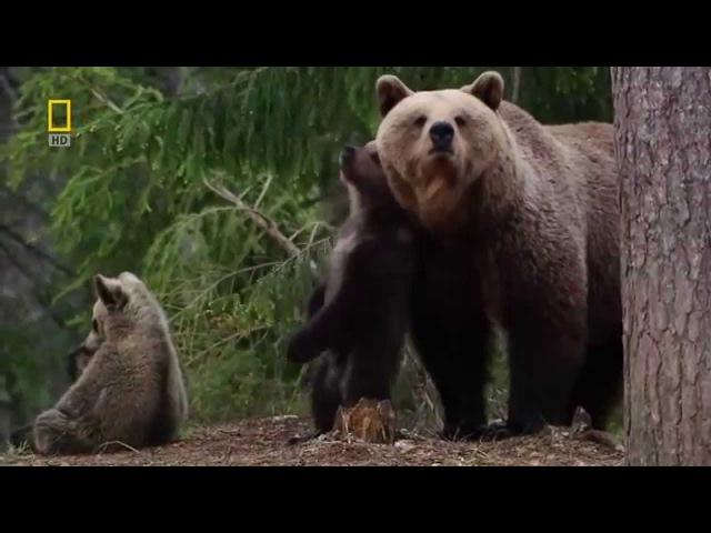 Дикая Природа России Первозданные Долины Документальный Фильм National Geographic