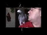 Попугай разговаривает с мужиком