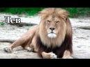 ЖИВОТНЫЕ для самых маленьких. Дикие животные АФРИКИ. Видео для детей.