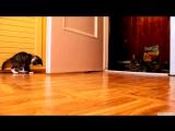 Весёлый котенок и его отец