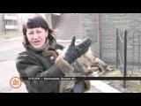 Красногоровка сегодня: жизнь на грани войны и мира