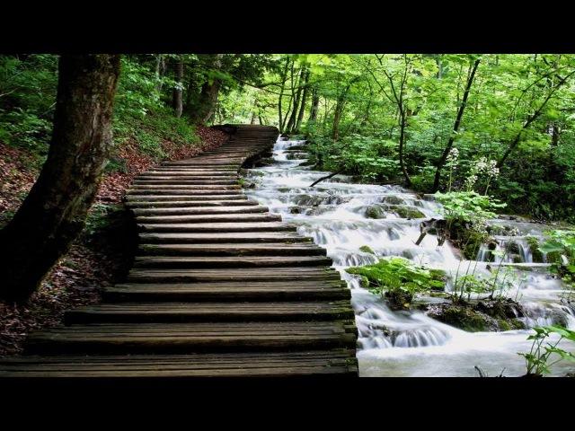 Лес, ручей, пение птиц. Звуки живой природы для медитации и релакса. Forest, stream for meditation