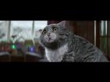 Очень милая реклама про кота и Рождество