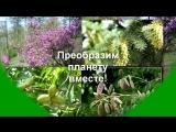 О питомниководстве в Родовом Поместье Агафоновых