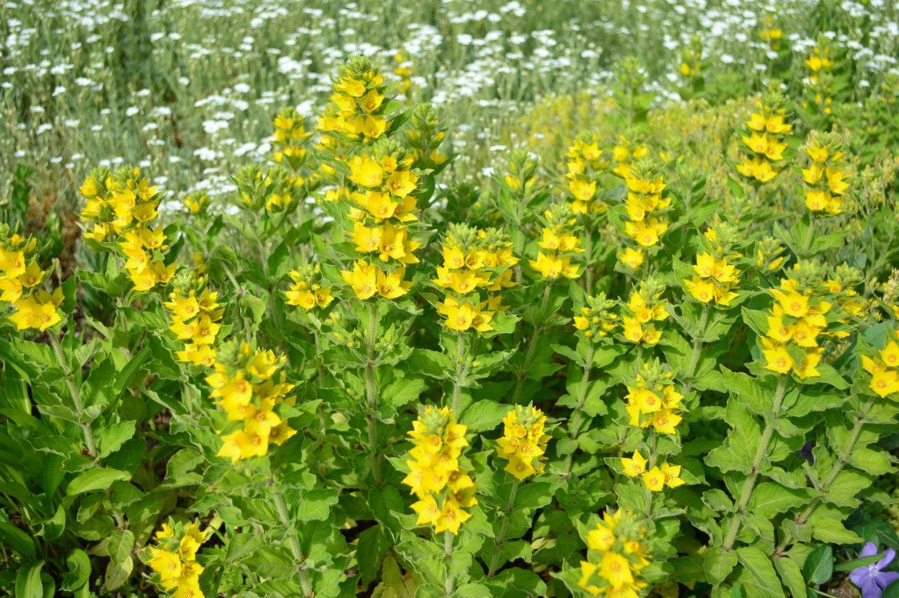 Розсада садових рослинок. JrWuer2SSRs