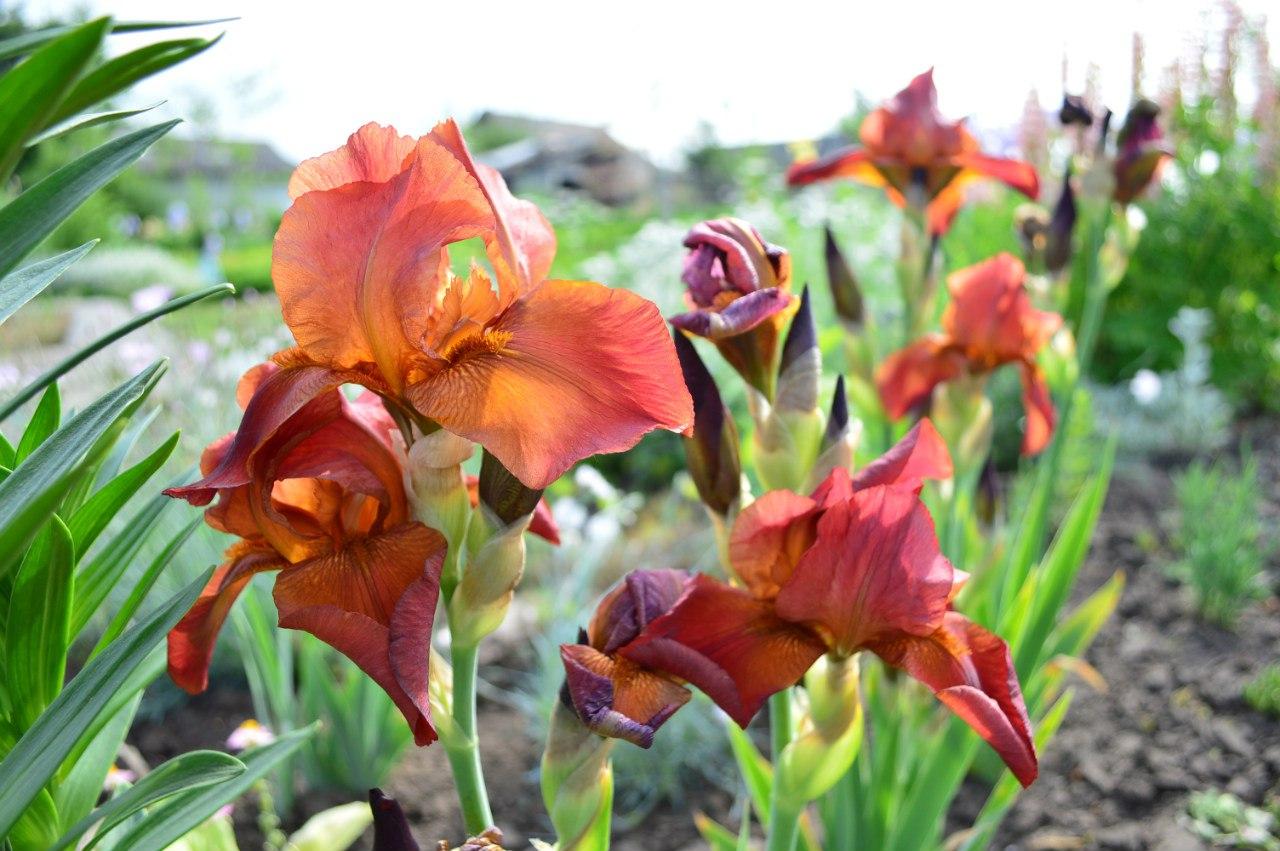 Розсада садових рослинок. HX2-5B54jQc
