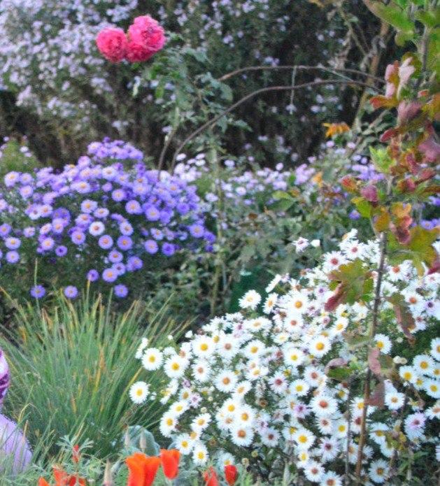 Розсада садових рослинок. TrtQwD9KcS4