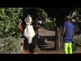 Упоротый пёс (6 sec)
