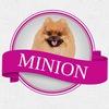 Салон MiniON стрижка собак и кошек