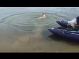 Вот это рыбалка поймал рыбу на свой член. Смешно до боли