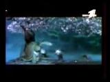 Казахский прикол про панду... ( 270p )