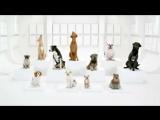 В рекламе Volkswagen собаки исполнили Имперский марш из Звездных войн