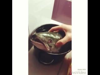 рыбный суп.🐟🍲 последняя рыбья песня 🐟🎤🙈
