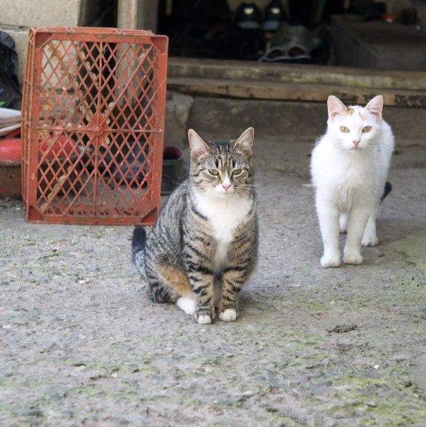 кошки, фото, индустар-50-2, жизнь