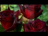 Олигарх под музыку Подиум - С Днём Рождения Милый (DJ Tulis &ampamp Mr. Jaky Remix) Роднулечка мой, поздравляю тебя с ДНЕМ твоег