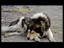 Грустная история собаки, до слёз