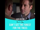 Идиомы в кино: Can't see the forest for the trees (