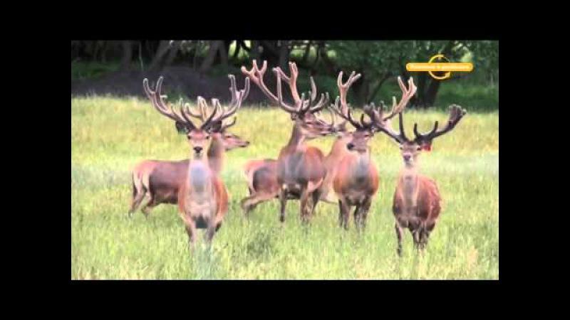 Дичеразведение Охотничьи истории