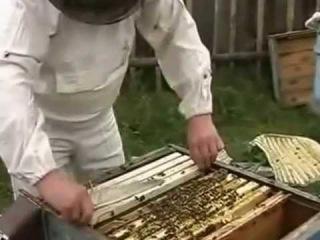 Пчеловодство зимовка. Норвежский способ зимовки пчел