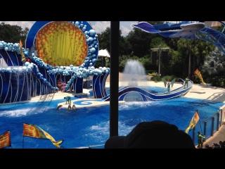 Шоу-4 с дельфинами и акробатами в стиле цирка дю Солей (Cirque du Soleil) .