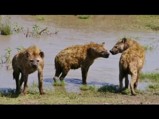 ТОП 10 Ужасные Спаривания Животных в сравнении с Человеком - YouTube