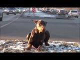 Пропала собака по кличке Дружок