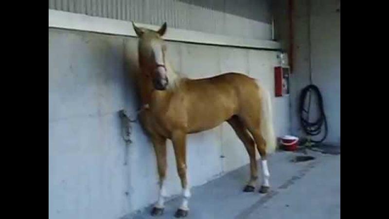 El caballo más guapo y brioso