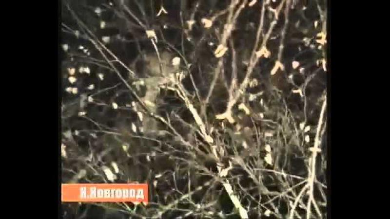 Спасение кота Барсика в Нижнем Новгороде