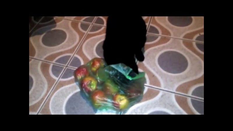 Танец кота с яблоками
